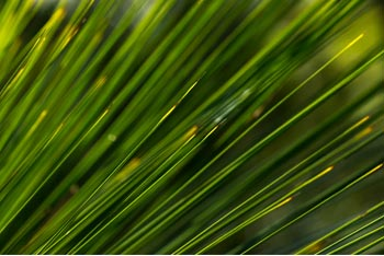 Green Fronds Pattern